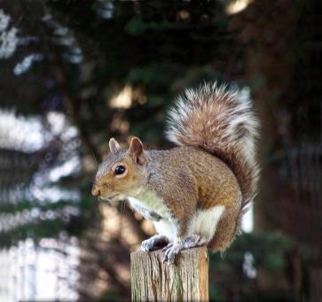 Squirrely World