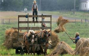 Picture taken from http://www.telegraph.co.uk/news/worldnews/northamerica/usa/3473461/Amish-sue-US-government-for-mark-of-the-Beast-on-livestock.html